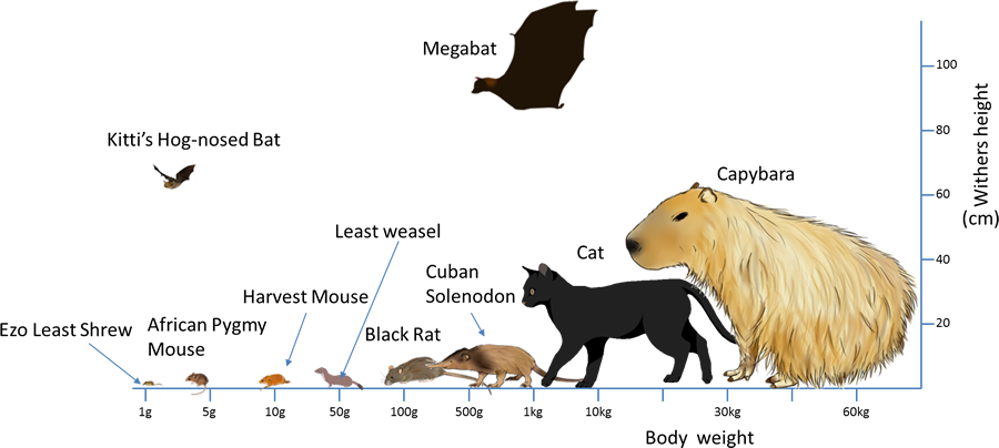 Mammal's Locomotion