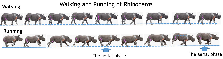 Fig.9 Walking and Running of Rhinoceros